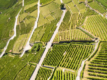 Aerial view of Vineyards in Lavaux region - Terrasses de Lavaux Stock Image