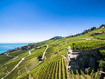 Aerial view of Vineyards in Lavaux region - Terrasses de Lavaux Stock Photo