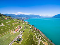 Aerial view of Vineyards in Lavaux region - Terrasses de Lavaux Royalty Free Stock Photography
