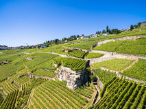 Aerial view of Vineyards in Lavaux region - Terrasses de Lavaux Stock Photography