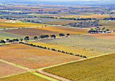 Aerial view of Vineyards and Orchards. Aerial view of Agricultural Grape Vines and Orchards in Autumn, Aldinga, South Australia Stock Image