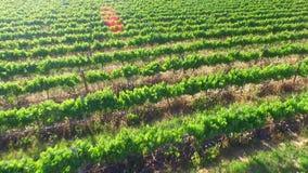 Vineyard Aerial Views stock footage