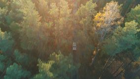 Aerial view of vintage car rides in forest stock footage