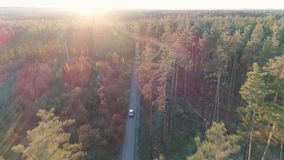 Aerial view of vintage car rides in forest in sunlight stock video