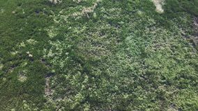 Aerial view of water surface covered with green lush vegetation in wetlands. Shot with a DJI Mavic fps 29,97 4k stock footage