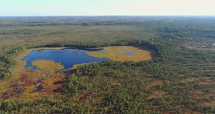 Aerial view of the wetlands swamp. Beautiful nature landscape. stock footage