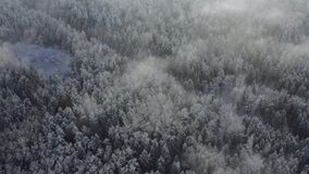 Aerial view of white conifer tree tops in winter forest