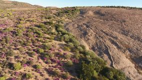 Aerial view of wild flowers - South Africa stock video footage