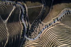 Aerial view of a winding road along the vineyards in the hills of the douro valley stock photography