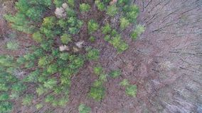 Aerial view of winter / autumn forest. drone photography. View above forest of coniferous pine and deciduous oak. Royalty Free Stock Photos