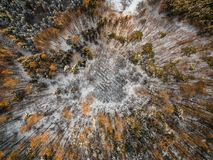 Aerial view of winter forest royalty free stock images