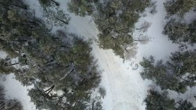 Aerial view of winter frozen forest covered in snow Royalty Free Stock Image