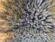 Aerial view of winter forest covered in snow. drone photography - panoramic image royalty free stock photo