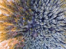 Aerial view of winter forest covered in snow. drone photography - panoramic image royalty free stock photography