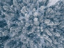 Aerial view of winter forest covered in snow and frost. Drone photography Royalty Free Stock Photography