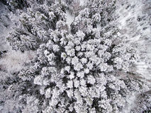 Aerial view of winter forest from drone. Aerial view of winter forest covered in snow. drone photography Royalty Free Stock Image