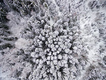 Aerial view of winter forest from drone. Aerial view of winter forest covered in snow. drone photography Royalty Free Stock Photography