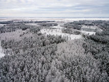 Aerial view of winter forest from drone Stock Photo