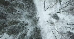 Aerial view of the winter forest stock video footage
