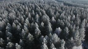 Aerial view of a winter forest. Nature ecology concept. Winter time, coziness, enjoying sunrise. Beautiful sunny day.