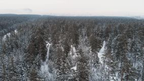 Aerial view of winter forest. stock video