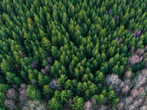 Aerial view of winter forest royalty free stock photography