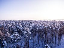 Aerial view on winter forest. Tops of snowy tree branch and freeze lakes on background. Birds eye view. Aerial view winter forest. Tops of snowy tree branch and royalty free stock photos