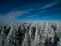 Aerial view of winter forest Stock Photo