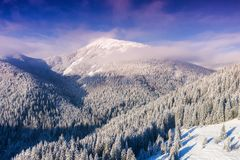 Aerial view at the winter mountains and forest. Natural winter landscape from air. Forest under snow a the winter time. Landscape from drone stock photo