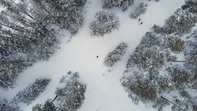Aerial view of winter forest. stock footage