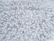 Aerial view of a winter snow-covered pine forest. Winter forest texture. Aerial view. Aerial drone view of a winter landscape. Sno. W covered forest. Aerial stock photography