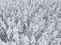 Aerial view of a winter snow-covered pine forest. Winter forest texture. Aerial view. Aerial drone view of a winter landscape. Sno. W covered forest. Aerial stock images