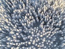 Aerial view of a winter snow-covered pine forest. Winter forest texture. Aerial view. Aerial drone view of a winter landscape. Sno. W covered forest. Aerial royalty free stock photos