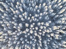Aerial view of a winter snow-covered pine forest. Winter forest texture. Aerial view. Aerial drone view of a winter landscape. Sno stock photo