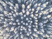 Aerial view of a winter snow-covered pine forest. Winter forest texture. Aerial view. Aerial drone view of a winter landscape. Sno. W covered forest. Aerial royalty free stock image