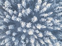 Aerial view of a winter snow-covered pine forest. Winter forest texture. Aerial view. Aerial drone view of a winter landscape. Sno. W covered forest. Aerial royalty free stock photo