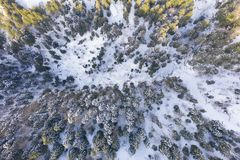 Aerial view of winter snow covered pine forest and valley. Aerial drone view of a winter landscape royalty free stock photo