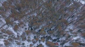 Aerial view winter snowscape with forest, trees and snowy cliffs. Blue sky. Winter landscape. Siberia stock footage