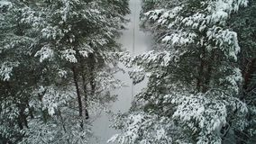 Aerial view of winter snowy forest. Aerial view of beautiful and snowy winter forest stock video footage