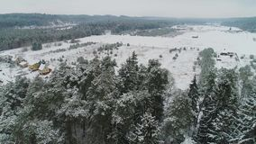 Aerial view of winter snowy forest. Aerial view of beautiful and snowy winter forest stock video
