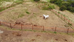 Aerial view of a woman trains her horse in the paddock.