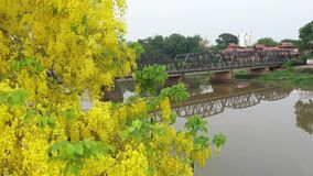 Aerial view Yellow flowers and The Old Iron Bridge with Ping River in Chiangmai, Thailand.