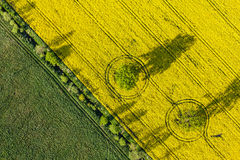 Aerial view of yellow harvest fields Royalty Free Stock Photo