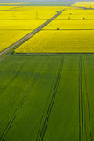 Aerial view of yellow rapeseed. (Brassica napus) flowers and green crops fields Royalty Free Stock Images