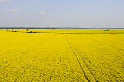 Aerial view of yellow rapeseed. (Brassica napus) fields Stock Images