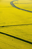 Aerial view of yellow rapeseed. (Brassica napus) fields with dry irrigation channels Stock Photos