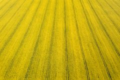 Aerial view of yellow rapeseed field. Aerial view agricultural. Fields Royalty Free Stock Photo