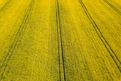 Aerial view of yellow rapeseed field. Aerial view agricultural. Fields Royalty Free Stock Image