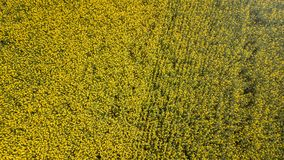 Aerial view of yellow rapeseed field. Aerial view agricultural. Fields Stock Photo