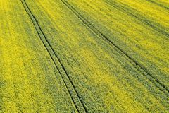 Aerial view of yellow rapeseed field. Aerial view agricultural. Fields stock photography